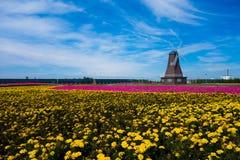 菊花,风车,天空 库存图片