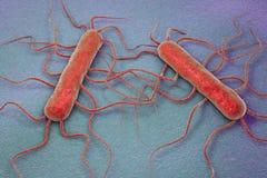 细菌李斯特氏杆菌monocytogenes 免版税库存照片