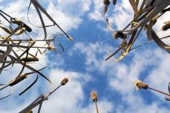 水菖蒲在秋天 免版税库存图片