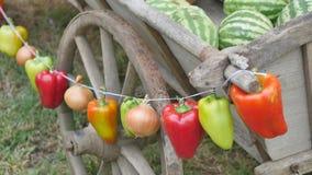 菜和新鲜蔬菜诗歌选  股票视频
