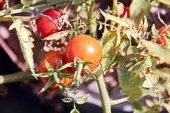 菜和果子特写镜头秋天收获  库存图片