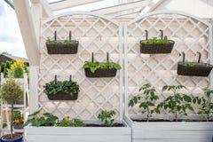 菜和沙拉在装饰垂直的庭院和被上升的床里 免版税库存图片