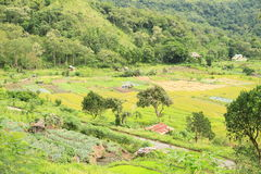 菜和米padi在弗洛勒斯的山调遣 免版税库存图片