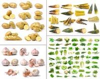 菜和草本汇集在白色背景 图库摄影