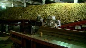 菜商店土豆和红萝卜在传动机 股票录像