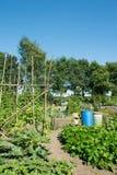 菜园在夏天 免版税库存照片