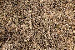 菜土壤背景在早期的春天 免版税库存图片