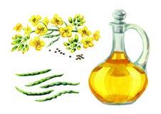 菜子油集合 水彩手拉的例证,隔绝在白色背景 库存例证
