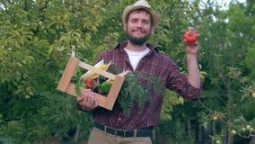 菜家庭企业,英俊的农夫拿着一个木板箱和生物红色蕃茄在收获在背景期间  股票录像