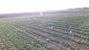 菜怎么在领域增长 蕃茄,夏南瓜,黄瓜,茄子,土豆在领域增长 的帮助的 影视素材