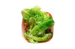 菜沙拉在一块板材的在白色背景 免版税库存照片