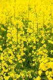 菜油和添加剂的生产的原材料对生物燃料 库存照片