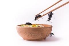 主菜蟑螂 免版税库存照片