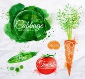 菜水彩圆白菜,红萝卜,蕃茄, 库存图片