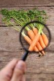 菜质量分析的概念 库存图片