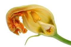 菜zu一朵小橙色花的夏天芽内在裁减  免版税库存图片