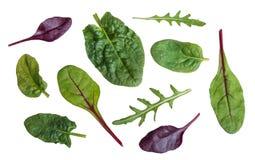菠菜、唐莴苣、红色甜菜和rucola叶子  免版税库存照片