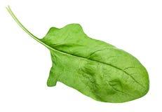 菠菜叶子 库存图片