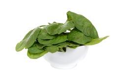 菠菜叶子 免版税图库摄影