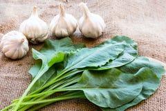 菠菜和大蒜 免版税库存图片