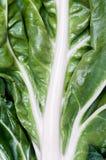 菠菜甜菜细节  库存照片