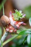 菠萝和蜗牛背景385 库存照片