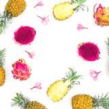 菠萝和龙热带框架结果实与在白色背景的热带桃红色花 平的位置,顶视图 免版税库存图片