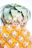 菠萝在白色背景中 库存照片