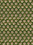 菠萝无缝的皮肤 免版税库存照片