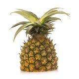 菠萝没有隔绝白色背景 图库摄影