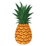 菠萝的传染媒介例证 免版税库存照片