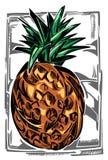 菠萝的彩色插图 免版税库存图片