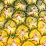 菠萝芽特写镜头 库存照片