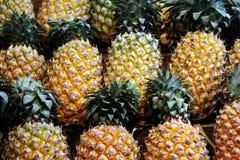 菠萝连续是 库存照片