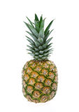 菠萝 免版税图库摄影