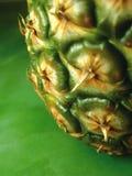 菠萝3 库存照片