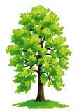 菩提树传染媒介图画  库存例证