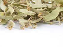 菩提树叶子 免版税图库摄影