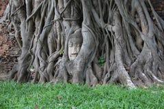 菩萨头和树根和砖墙 免版税库存图片