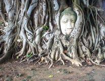 菩萨头的在树,阿尤特拉利夫雷斯泰国独特的斑点 免版税库存图片