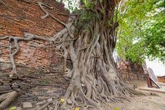 菩萨雕象和古老废墟 免版税库存照片
