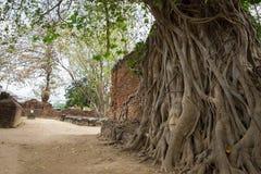 菩萨雕象和古老废墟 图库摄影