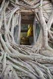 菩萨雕象教会老砖墙和树根源于Wat轰隆Kung Samut Sakhon泰国 免版税库存图片