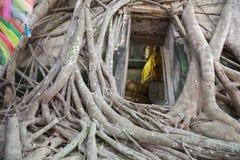 菩萨雕象教会老砖墙和树根源于Wat轰隆Kung Samut Sakhon泰国 免版税库存照片
