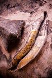 菩萨雕象的微笑的面孔 免版税库存图片