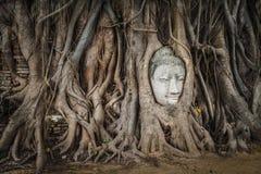 菩萨面对在根的雕象,泰国 库存图片