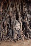 菩萨顶头结构树 免版税库存照片