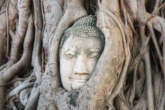 菩萨顶头结构树 库存图片