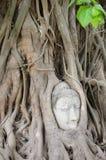 菩萨顶头根结构树 免版税图库摄影