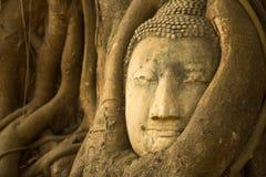 菩萨头在阿尤特拉利夫雷斯,泰国 自然 图库摄影